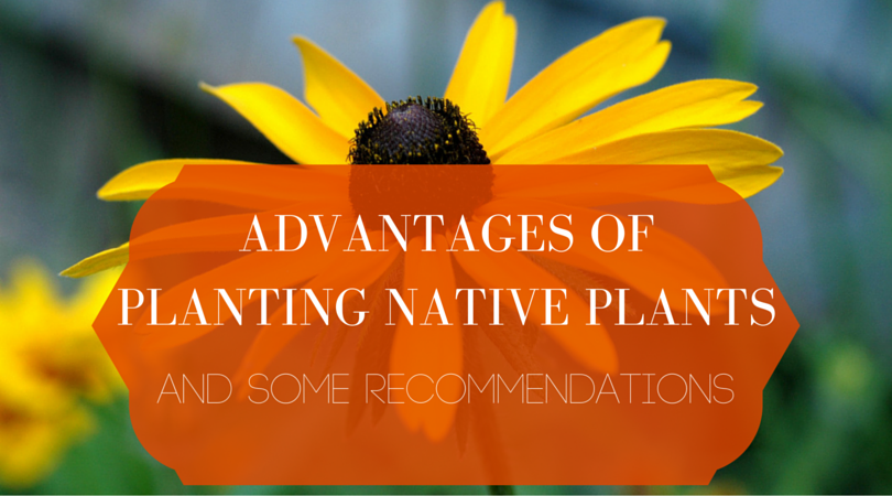 Advantages of native plants
