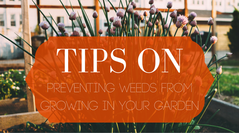 Tips on Preventing Weeds from Growing in Your Garden