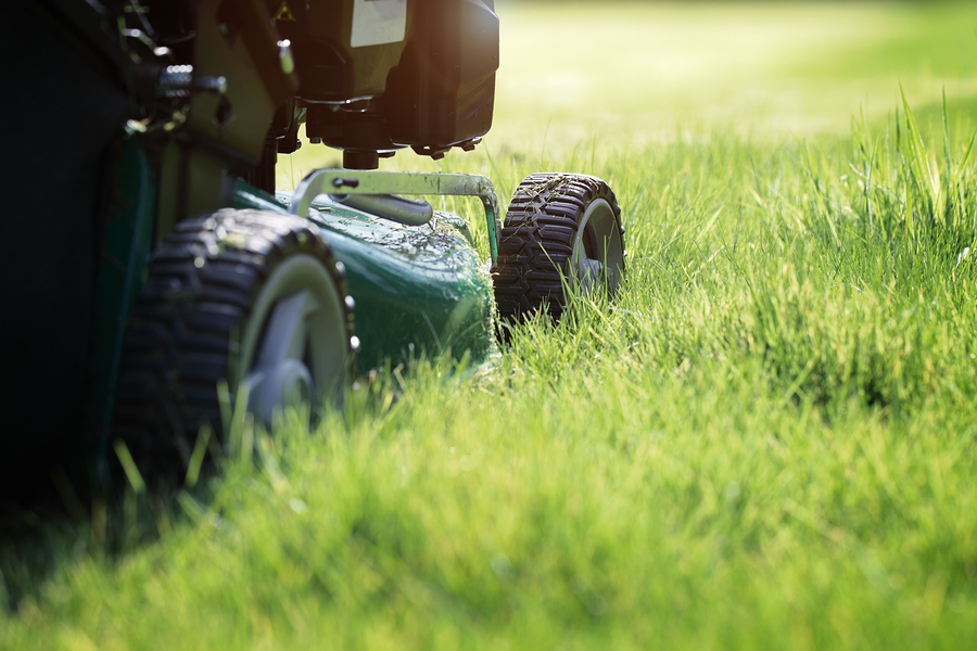 Mowing or cutting the long grass with a green lawn mower in the