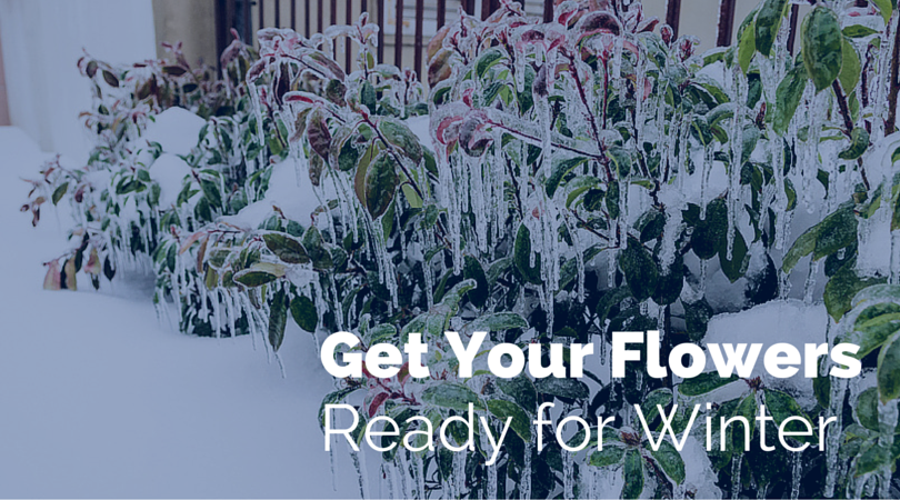 shrub covered in ice with text get your flowers ready for Winter