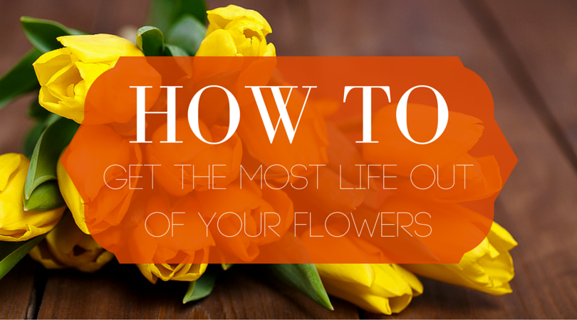 How to Get the Most Life Out of Your Flowers