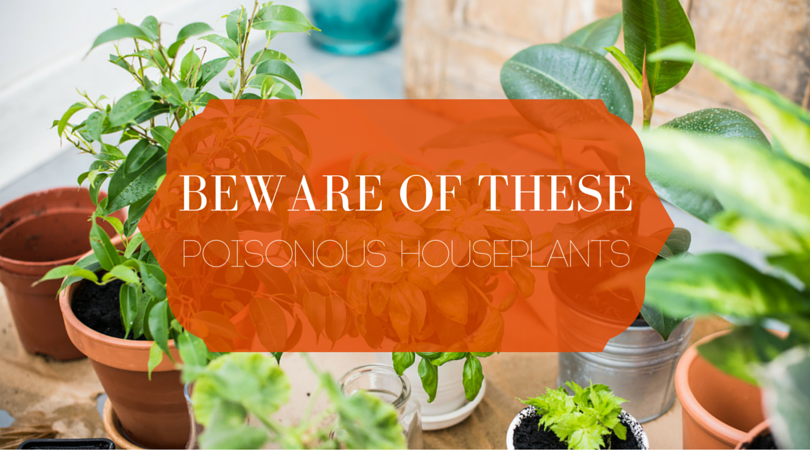 plants in planters with text beware of these poisonous houseplants.