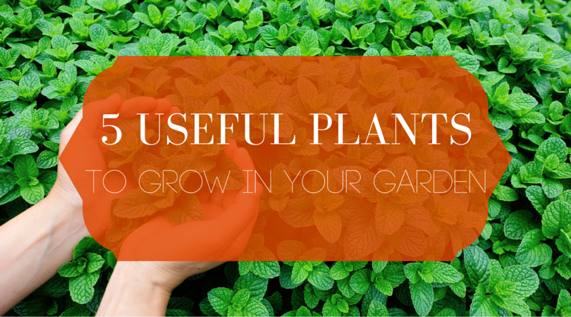 Useful Plants to Grow in Your Garden