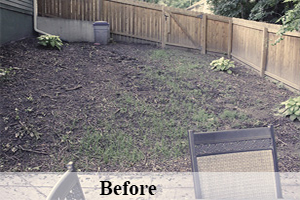 Before of a dead lawn